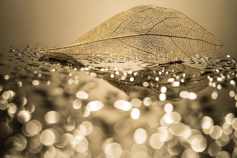 Transparent leaf skeleton and water droplets